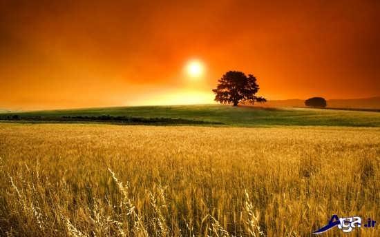 تصاویر زیبای غروب خورشید