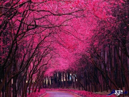 منظره های عاشقانه از طبیعت زیبا