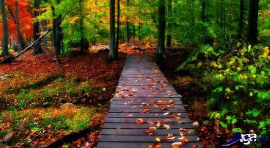 مناظر زیبا و عاشقانه پاییزی