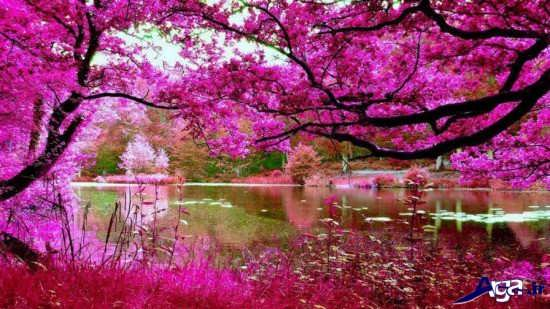 تصاویر رمانتیک طبیعت