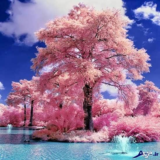 عکس های عاشقانه و بسیار زیبای طبیعت