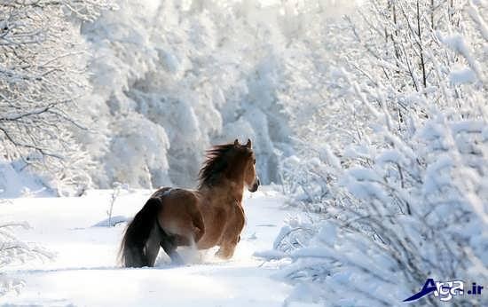 عکس بسیار زیبا از مناظر زیبای برفی