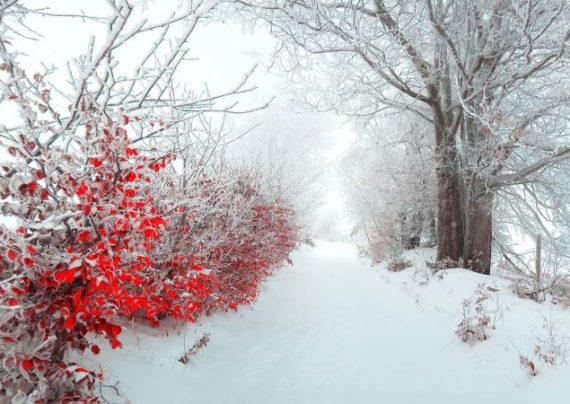تصاویر زمستانی بسیار زیبا