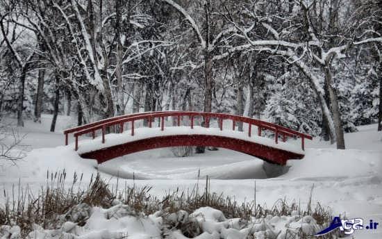 عکس های دیدنی فصل زمستان