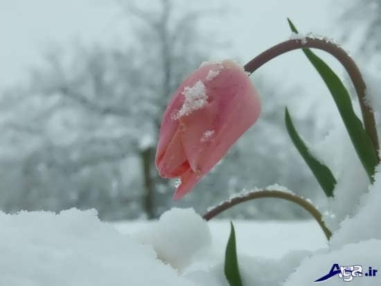 تصاویر رمانتیک برف