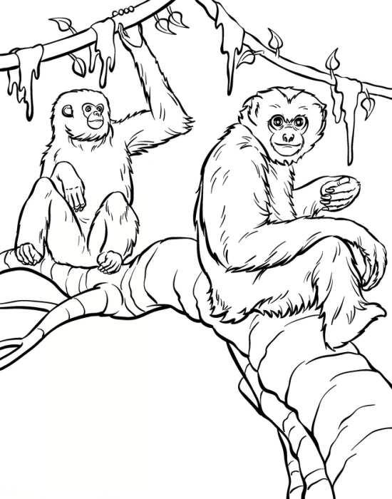 نقاشی میمون با طرح های زیبا