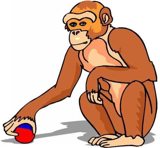 رنگ آمیزی میمون برای کودکان دختر و پسر