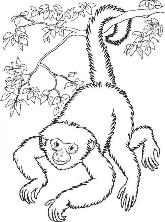 نقاشی های زیبا و متفاوت میمون
