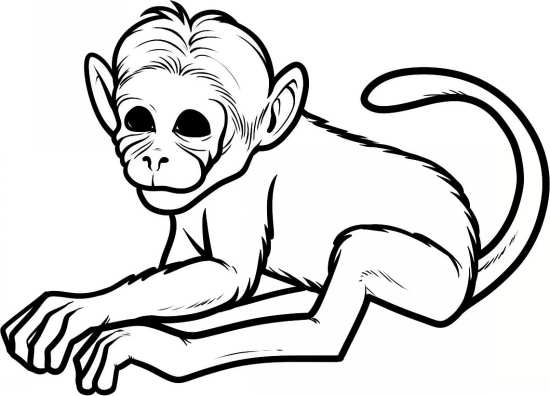 نقاشی میمون برای رنگ آمیزی کودکان در خانه
