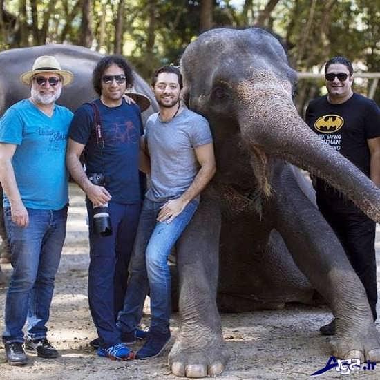 فیل سواری بهرام رادان