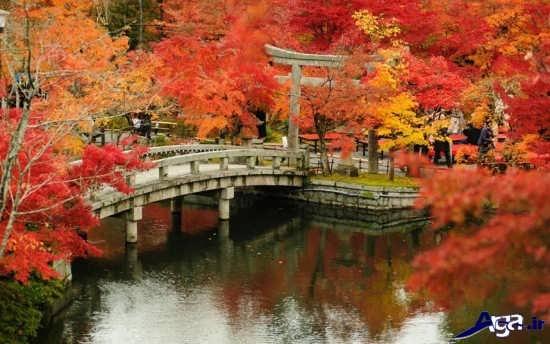 عکس های زیبای طبیعت پاییزی