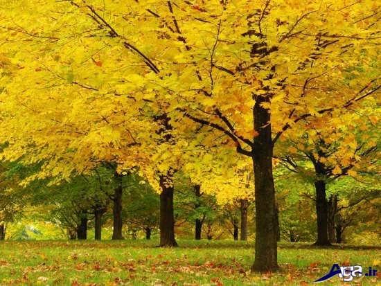 عکس های بسیار زیبا و جذاب از طبیعت