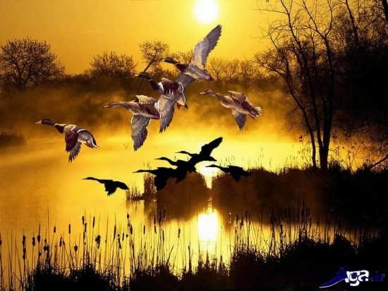 عکس های زیبا و جذاب طبیعت