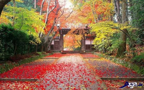 تصاویر زیبای طبیعت پاییزی