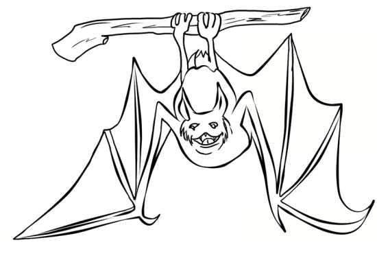 نقاشی زیبا خفاش