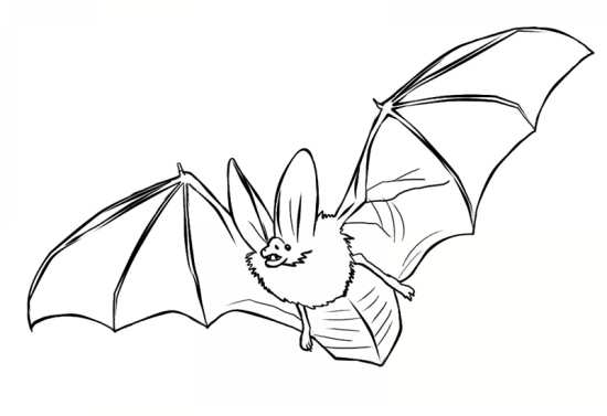 نقاشی های مختلف پرنده خفاش