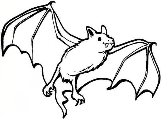 نقاشی های مختلف خفاش با طرح های مختلف