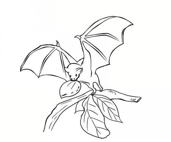 نقاشی های مختلف خفاش با انواع طرح های فانتزی و جدید