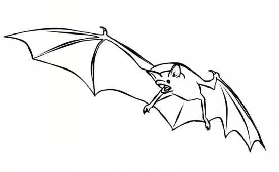نقاشی جالب خفاش