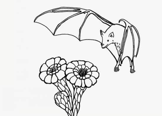نقاشی گل و خفاش