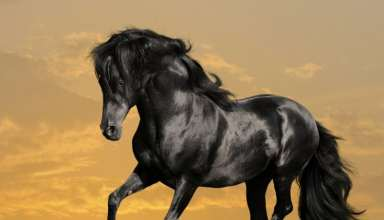 عکس اسب های زیبا و دیدنی