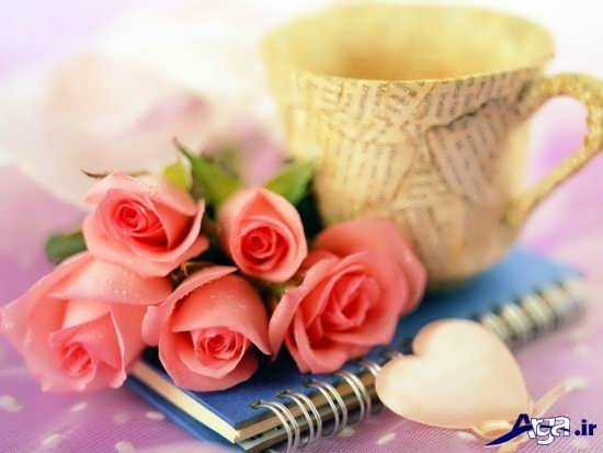 عکس گل های رز عاشقانه