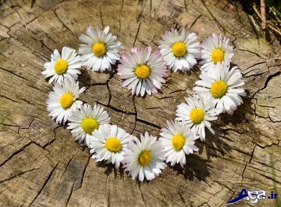 عکس قلب و گل زیبا