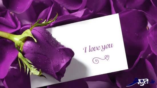 عکس گل زیبای عاشقانه