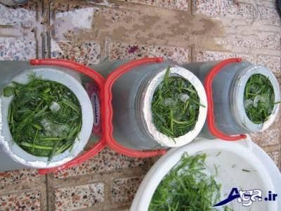 طرز تهیه خیارشور در خانه