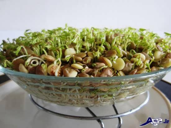 طرز تهیه سبزه عید با عدس