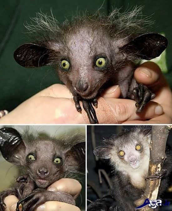 عجیب ترین حیوانات کره زمین