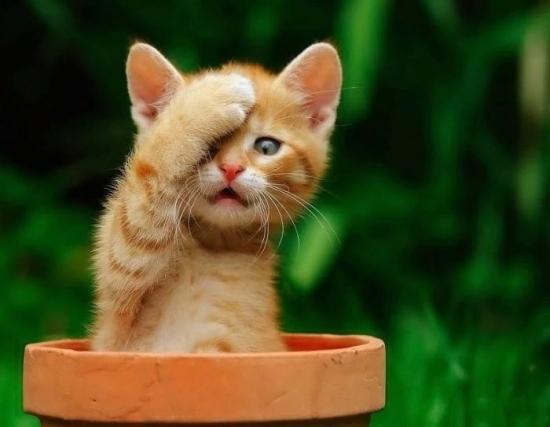 عکس گربه با مزه برای پروفایل