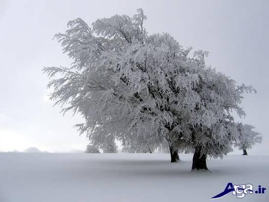 عکس طبیعت در روز های برفی