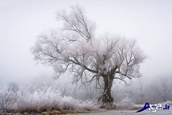 عکس زمستان و مناظر برفی