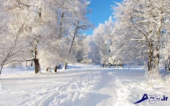 عکس طبیعت در زمستان
