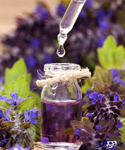 درمان گیاهی سرگیجه