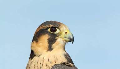 عکس پرندگان شکاری