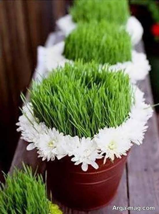 روش تهیه سبزه ماش زیبا