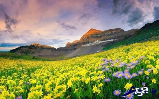 عکس بی نظیر از طبیعت