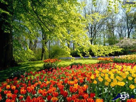 منظره های بهاری فوق العاده زیبا