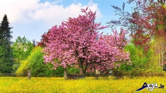 عکس زیبای بهاری