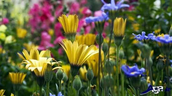 گل های بهاری زیبا