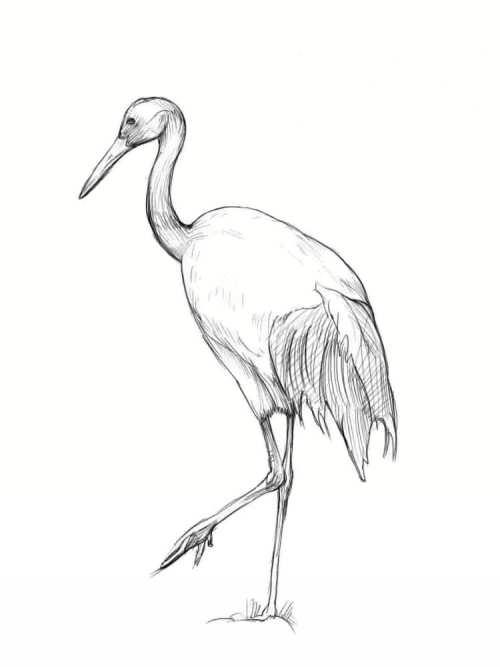 نقاشی پرنده زیبا لک لک