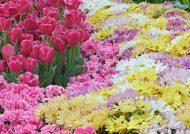 عکس گل های رنگارنگ بسیار زیبا