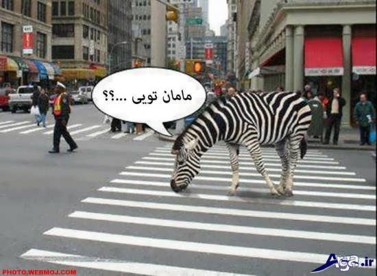 تصویر طنز خنده دار و جالب