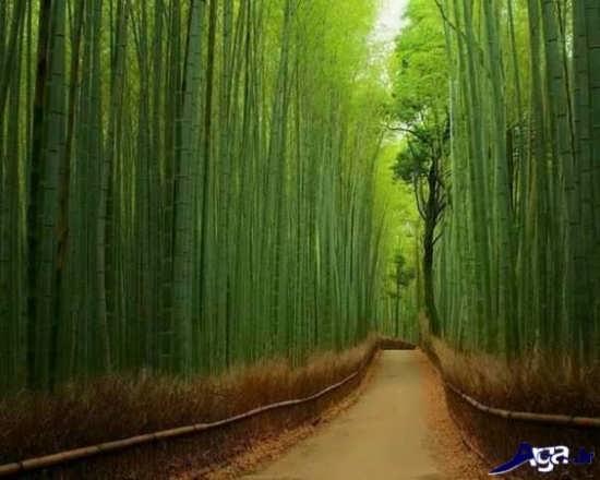 عکس منظره زیبا در ژاپن