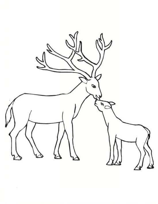 نقاشی گوزن بدون شاخ و با شاخ