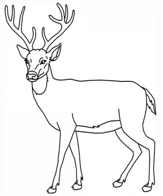 نقاشی گوزن برای رنگ آمیزی کودکان