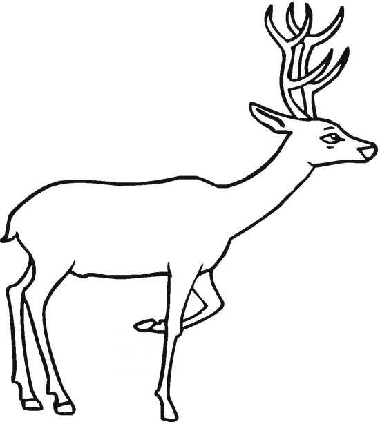 نقاشی گوزن زیبا