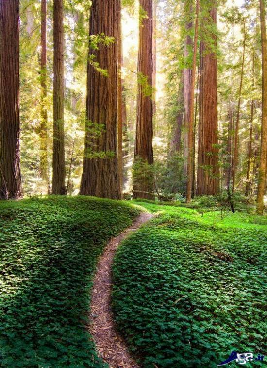 تصویر زیبایی از طبیعت